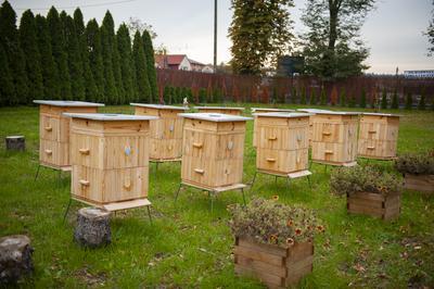 W firmowych pasiekach FormasterGroup — w 20 ulach mieszkają pszczoły, w których ochronę od kilkulat angażuje się spółka.