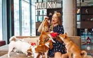 Slow food w psiej misce