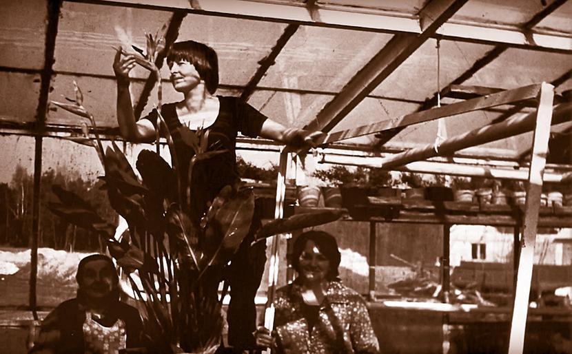 Uprawa kwiatów w latach 70.
