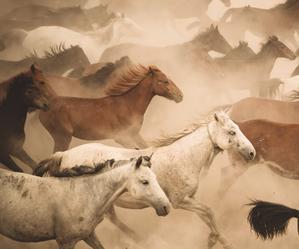 Naukowcy ustalili, kto udomowił konie