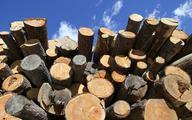 Drewna zabrakło, bo było... za dużo