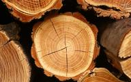 IKEA rozpoczęła audyt łańcucha dostaw drewna z Ukrainy