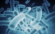 Rewolucja w podejściu do mikrobiomu