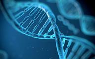 Terapia genowa ma szansę zostać nową metodą leczenia przewlekłej choroby nerek