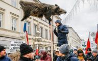 Afrykański wirus uderzy w polski eksport