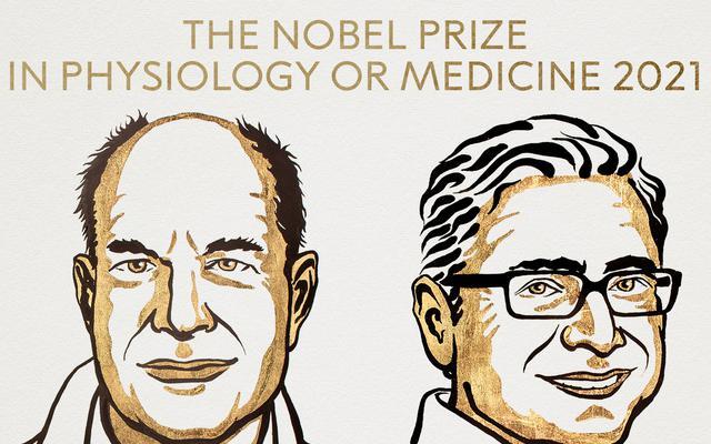 Medyczny Nobel za odkrycie odsłaniające jedną z tajemnic natury