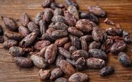 Ghana oczekuje rekordowych zbiorów kakao