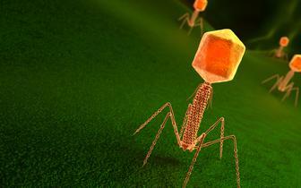 Antybiotykooporność: w jej pokonaniu pomocne mogą być bakteriofagi