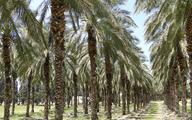 Największy dostawca oleju palmowego może pobić rekord produkcji