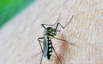Badania nad malarią: jest postęp, choroba zostanie wyeliminowana?