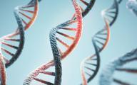 Pełna sekwencja ludzkiego genomu coraz bliżej
