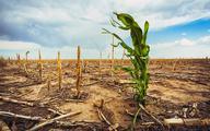 Afryka może potrzebować nawet 200 mld USD rocznie na zmiany klimatyczne