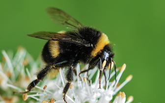 Fundacja Centrum Walki z Alergią: Pacjenci uczuleni na jad owadów błonkoskrzydłych potrzebują lepszego dostępu do terapii ratującej życie