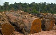 Wylesianie Amazonii największe od 12 lat