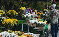 ARiMR i KOWR odkupią kwiaty i rośliny