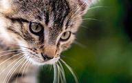 Pogryzienie przez psa i kota – czy potrzebny antybiotyk