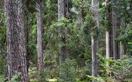 Lasy Państwowe przez ponad 20 lat wydały na małą retencję ponad 900 mln zł