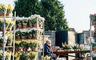 Dziesiątki milionów zlotych za więdnące kwiaty